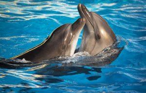 Дельфинарий немо пхукет плюс